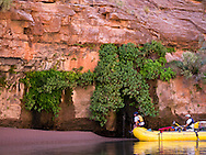 Yellow raft pulls up to beach with lush spring, Grand Canyon