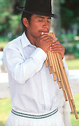 ECUADOR, COLONIAL musician with 'Zampona' panpipes