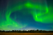 Northern lights (Aurora borealis)<br />Birds Hill Provincal Park<br />Manitoba<br />Canada
