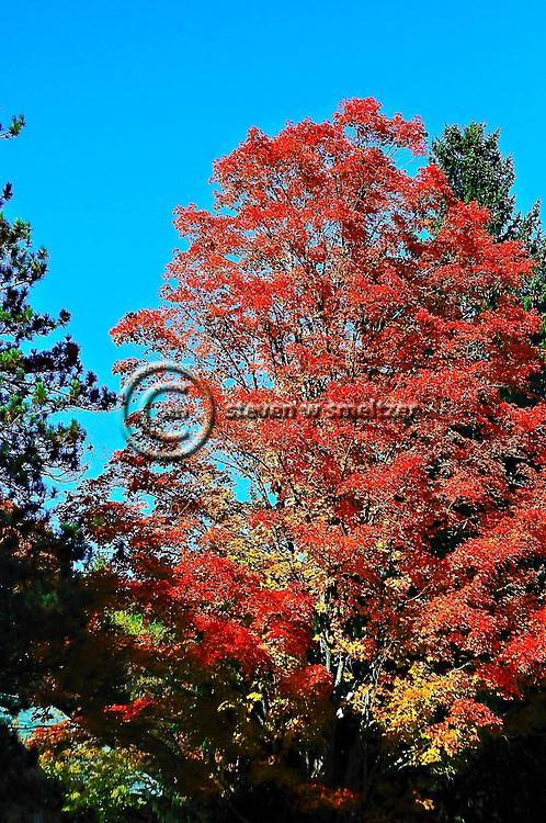 Fall Foliage Tour New England