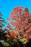 Fall Foliage Tour New England
