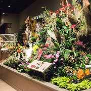An exhibit on orchids and flowers at the Smithsonian National Museum of Natural History on the National Mall in Washington DC.
