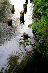 UK ENGLAND WILTSHIRE 26JUN08 - The river Kennet near Ramsbury in rural Wiltshire, western England...jre/Photo by Jiri Rezac / WWF UK..© Jiri Rezac 2008..Contact: +44 (0) 7050 110 417.Mobile:  +44 (0) 7801 337 683.Office:  +44 (0) 20 8968 9635..Email:   jiri@jirirezac.com.Web:     www.jirirezac.com..© All images Jiri Rezac 2008 - All rights reserved.