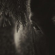 Under Trees - Hidden & Revealed