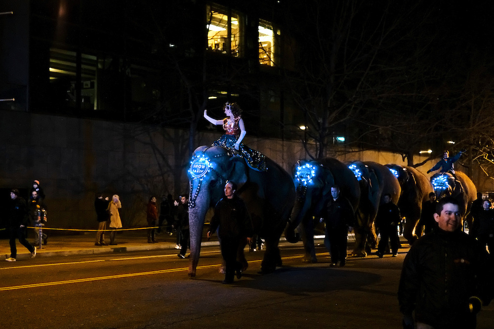 The annual parade of elephants marches up Third Street in Northwest Washington, DC on March 19, 2013. The parade, ending at the Verizon Center, marks the beginning of the Ringling Bros. Circus.