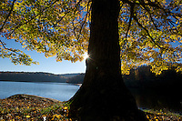 A crisp fall morning on the shores of Price Lake, which rests along the Blue Ridge Parkway, North Carolina.