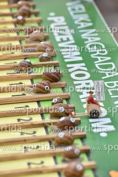 27.06.2015, Benkovac, CRO, Schneckenschritt, eine gastronomische Veranstaltung zum Verkosten von Schneckengerichten, im Bild ein Schneckenrennen w&auml;hrend der Veranstaltung Schneckenschritt // during a snail race at the event snails step a gastronomic event to sample snail dishes at Benkovac, Croatia on 2015/06/27. EXPA Pictures &copy; 2015, PhotoCredit: EXPA/ Pixsell/ Dino Stanin<br /> <br /> *****ATTENTION - for AUT, SLO, SUI, SWE, ITA, FRA only*****