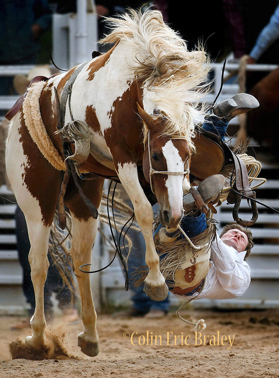 "Best rodeo photos from the Ranch Hand Rodeo in Randolph, Utah August 29, 2009- Cody Simpson falls off as his saddle gives way during the saddle bronc competition. Workers from various ranches in the region battle for bragging rights in the event many call one of the few ""real cowboy"" experiences left in the west.   Colin E. Braley"