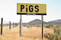 Sign For Pigs in New Mexico
