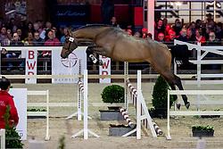 084, Clarimo Junior<br /> BWP Hengstenkeuring -  Lier 2020<br /> © Hippo Foto - Dirk Caremans<br />  17/01/2020