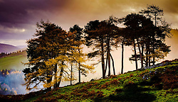 A group of trees on a hillside near Broughton in the Scottish Borders lit in misty autumn sunshine<br /> <br /> (c) Andrew Wilson | Edinburgh Elite media