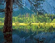 Spring Reflections, Leidig Meadow, Yosemite Valley, Yosemite National Park, California  2004