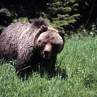 U.S. Wildlife