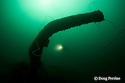 diver explores the wreck of a 100 m long American LST ( Landing Ship - Tank ) sunk at the end of WWII. The wreck sits upright at a depth of 28-35 m of water in Ilanin Bay, within Subic Bay, Philippines, MR 378