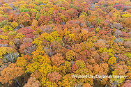 63876-02503 Aerial view of fall color trees Stephen A. Forbes State Park Marion Co. IL