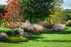 Autumn border at Ashwoods with Chionochloa rubra (Red tussock grass), Sorbus commixta 'Olympic Flame', Symphyotrichum ericoides 'Rosy Veil' and Berberis thunbergii f. atropurpurea 'Rosy Rocket'