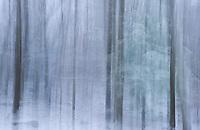 First Snow abstracts.  ©2017 Karen Bobotas Photographer