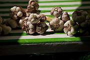 Garlic, St. Martin-Labouval, Central France
