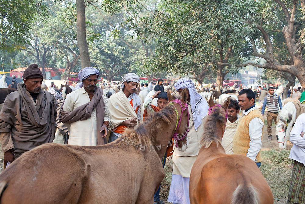 Men are examining some of the horses exhibited and traded during the yearly Sonepur Mela, Asia's largest cattle market, in Bihar, India.