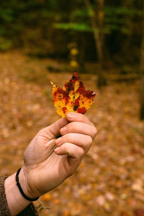Stowe, Vermont autumn 2014