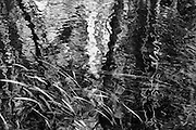 Creek reflections in spring. Yaak Valley, northwest Montana.