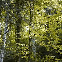 Alpine Dreams: The Wild Part 1