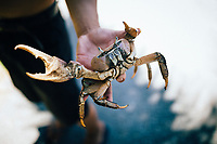 A young man holds a land crab for sale along the roadside in southern Guam.