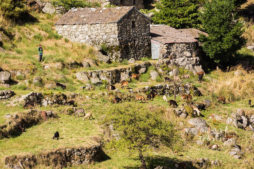 Goat herder and flock outside Mantaigas, Parque Serra da Estrela, Portugal