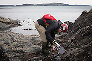 Duncan Smallman foraging for seaweed on the rocky shore of Easdale island in Argyll. Dr Smallman runs Slate Islands Seaweed, which offers people guided foraging tours of Easdale and neighbouring islands to identify and gather the many types of edible seaweed found in the local environment. Marine biologist Dr Smallman started the tours in 2016 and also supplies edible seaweed for a number of restaurants and catering outlets.