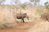 Walking rhinos
