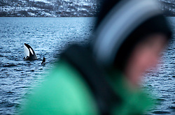 NORWAY TROMSO 4DEC15 - Greenpeace campaigner Christian Bussau of Germany observes Orca whales from a boat near the arctic city of Tromso during the polar night.<br /> <br /> jre/Photo by Jiri Rezac / Greenpeace<br /> <br /> © Jiri Rezac 2015