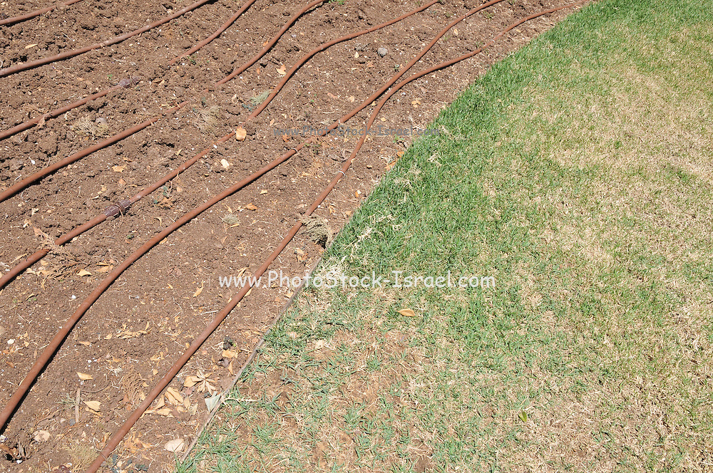 Drip Irrigation of a garden an efficient way to save water