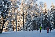 Skilangläufer, Wald, Schnee, Winter, Harz, Niedersachsen, Deutschland | cross country skiing, forest, snow, winter, Harz, Lower Saxony, Germany