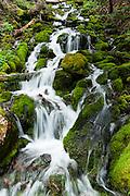A creek splashes beside the trail to Spray Park, in Mount Rainier National Park, Washington, USA.
