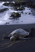 Punalu'u Black Sand Beach, Island of Hawaii<br />
