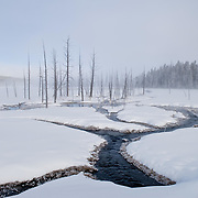 Winter scene from Yellowstone National Park.