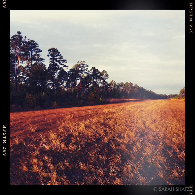 Field, Cabin Bluff