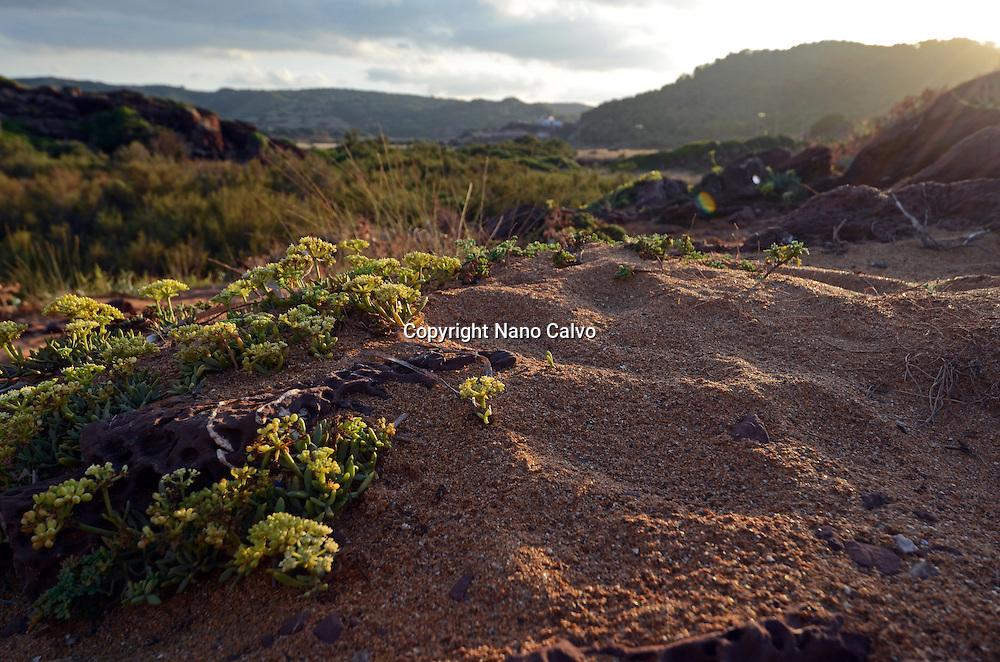 Vegetation in the surroundings of Cala Pregonda, Menorca