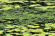 Pattern of aquatic vegetation in wetland<br /> North of Sioux Lookout<br /> Ontario<br /> Canada