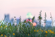 White Rock Lake-Big Spring