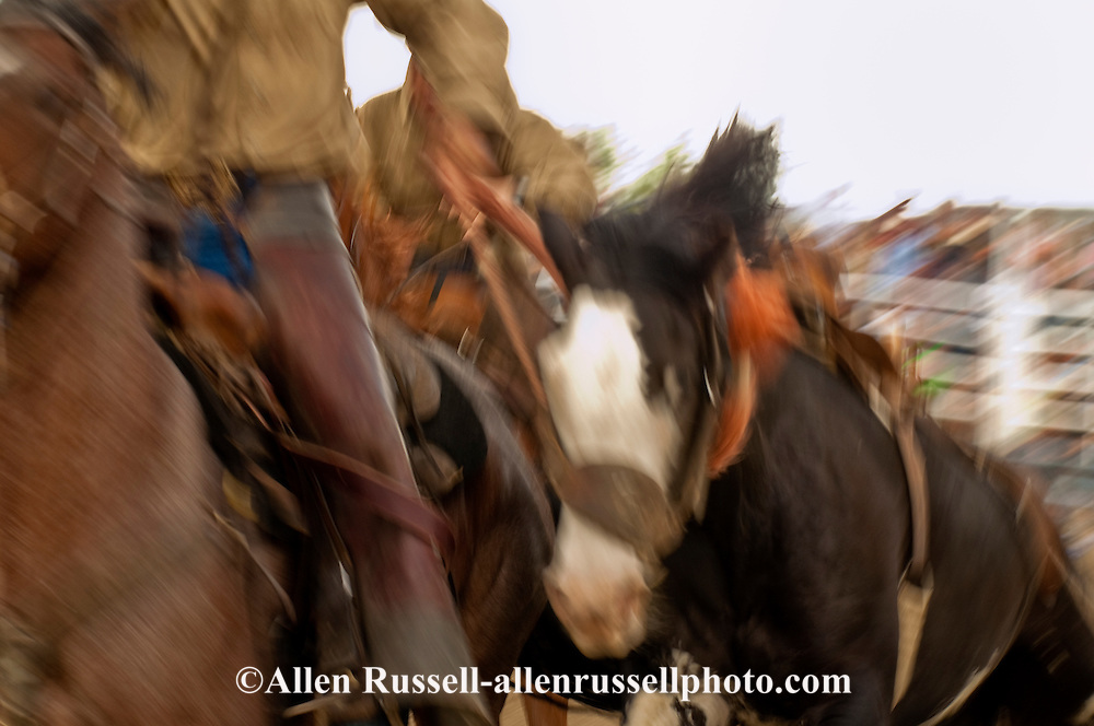 Pickup men pick up saddle bronc, Miles City Bucking Horse Sale, Montana, <br /> MODEL RELEASED