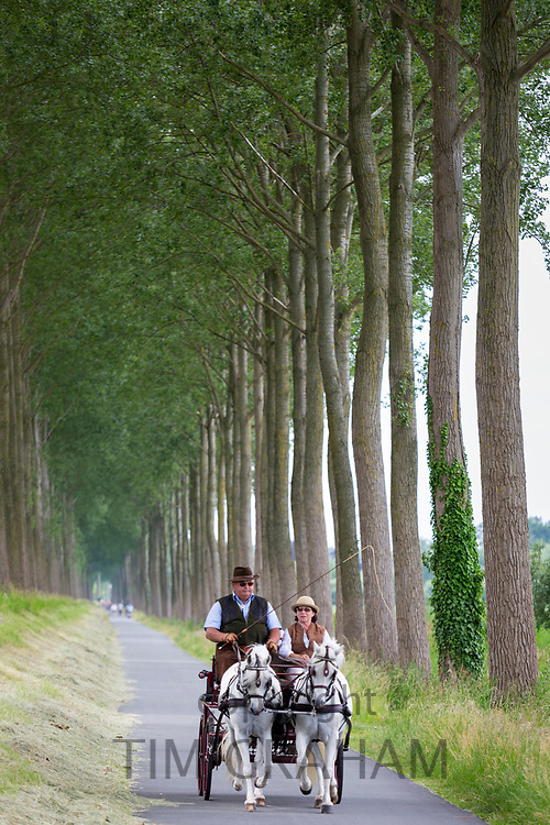Horses and Carriage riding by avenue of tall trees canaliside at Damme, province of West Flanders, Belgium