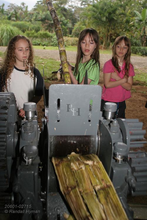 Ecoteach girls Soley Hyman (9), Kelsey Seibel (11) and Caitlin Seibel (9) feed sugar cane into motorized press at organic farm of Juan Bautista Castro; La Fortuna, Costa Rica.