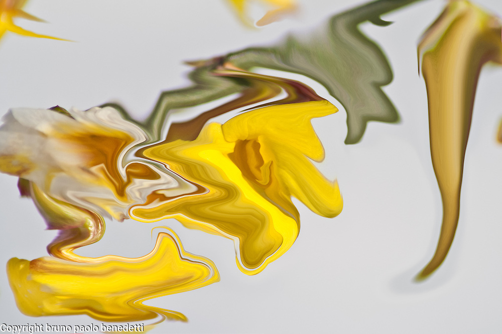 abstract yellow contrasts on white backgorund. Fluid shapes in yellow color with many shades.