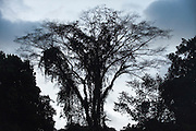 Trees<br /> Rain Forest<br /> Mapari<br /> Rupununi<br /> GUYANA<br /> South America