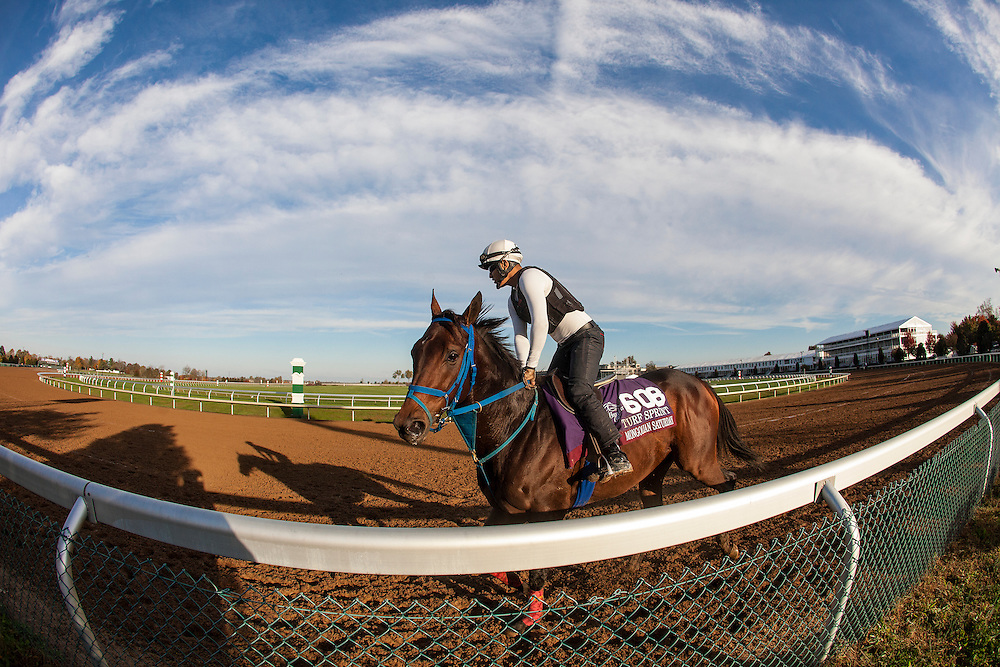 October 29, 2015:  Mongolian Saturday, trained by Enebish Ganbat and owned by Mongolian Stable, exercises in preparation for the Breeders' Cup Turf Sprint at Keeneland Race Track in Lexington, Kentucky. Alex Evers/ESW/CSM