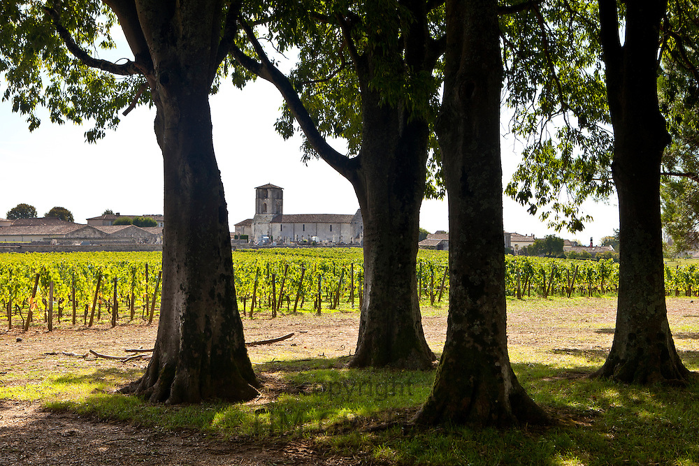 Vineyard at St Emilion in the Bordeaux wine region of France