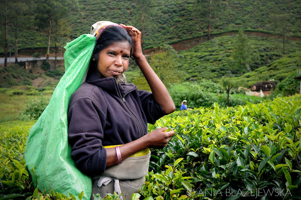 Sri Lanka, Nuwara Eliya. Portrait of a tea picker at work.