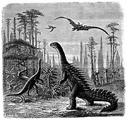 Ideal American landscape during the Jurassic epoch (based on Professor Othniel Marsh): Stegosaurus, Compsonotus (left) and Pterodactyls. From 'Scientific American', 29 November 1884. Engraving.