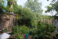 Fruit and vegetables are being cultivated at the Stop HS2 Wendover Active Resistance Camp on 17th July 2020 in Wendover, United Kingdom. Environmental activists from groups including Stop HS2 and HS2 Rebellion continue to protest against HS2, which is currently projected to cost £106bn and which will remain a net contributor to CO2 emissions during its projected 120-year lifespan, on environmental and economic grounds.